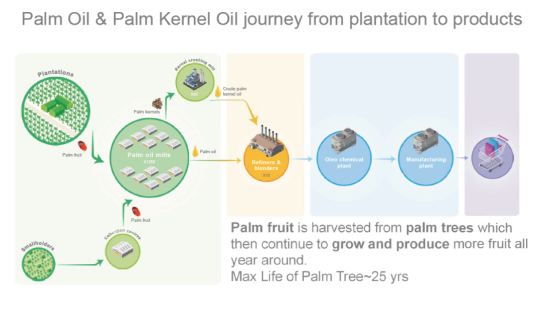 Palm fruit is harvested from palm trees which then continue to grow and produce more fruit all year around. Max life of a pam tree is around 25 years.